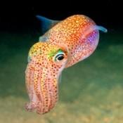 魷魚類 (10)